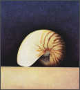 Wim Blom  Nautilus 1997 Egg tempera on paper on panel 25.3 x 23 cm